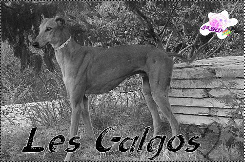 Article 11 →Les galgos