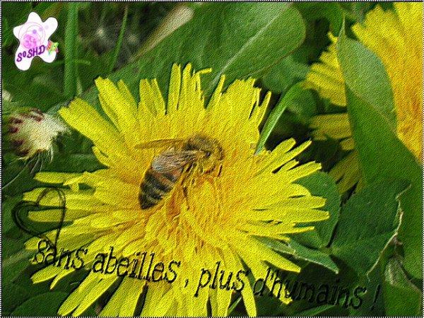 Article 25 →Les abeilles