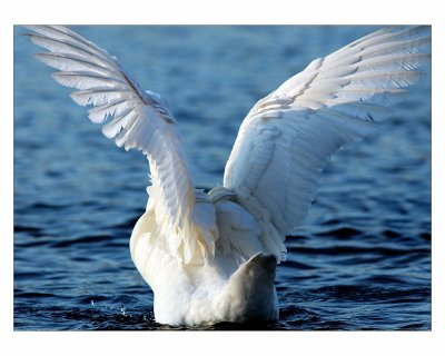 Ses ailes de Géant~