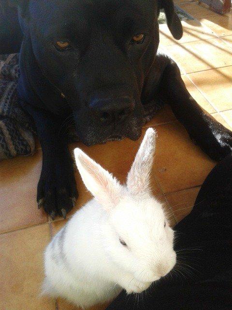 Zeus & missie