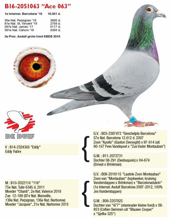 La 116 Rans Stijn &Jeroen superbe femelle reproductrice