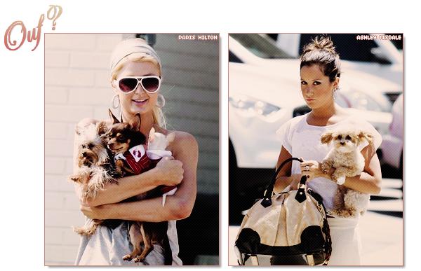 Elles ne sortent jamais sans leurs chiens!  $)