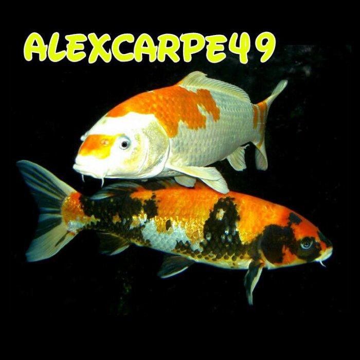 Alexcarpe49