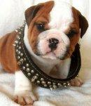 Photo de Dictionary-For-Dogs
