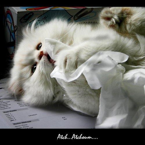 ho , je  suis malade !!lol!!! gros gros bisous a tous  et ^prenez soin de vous !! la grippe revient en force !!