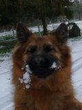 Photo de dog--white