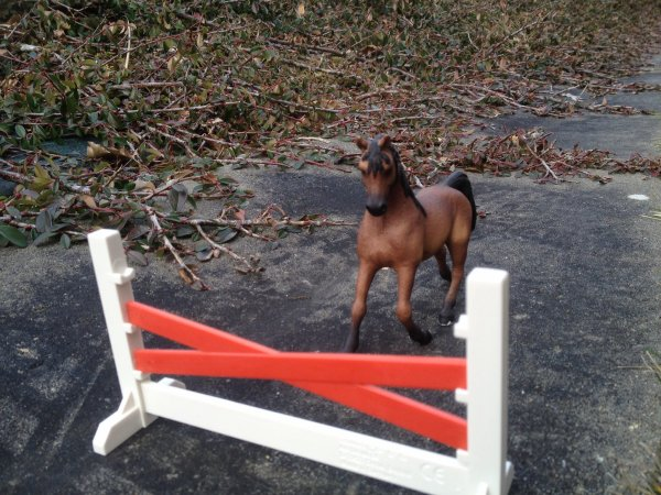 La vente de chevaux