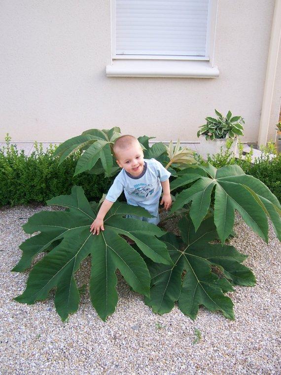 un futur jardinier