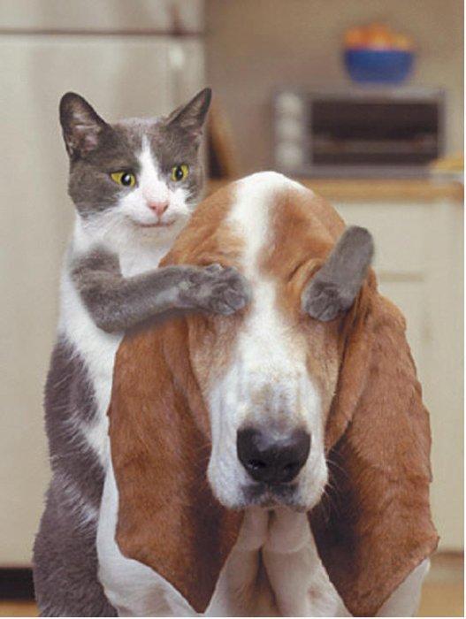 ADOPTER UN ANIMAL POUR LE RENDRE HEUREUX  DEFENSE DE L'ANIMAL
