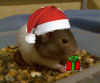 Mes-Hamsters