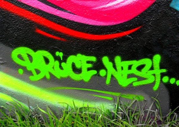 Bruce - Nest