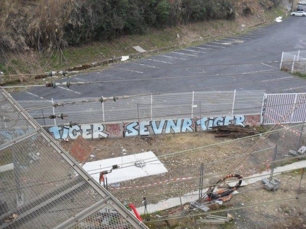 Tiger - SEVNR