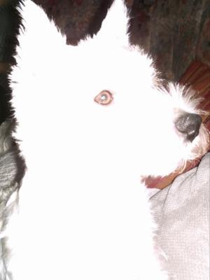 Blanc, comme...........moi !