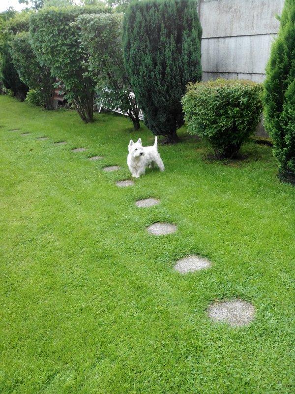 Mon jardin - Août 2016