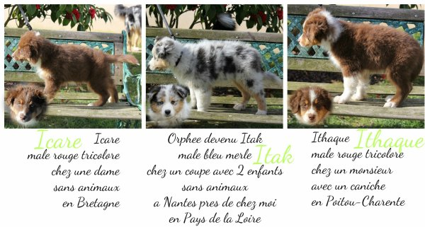 Article 38. Ghalya & ses chiots