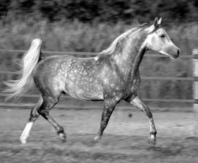 Maiis chevaux d'amOur