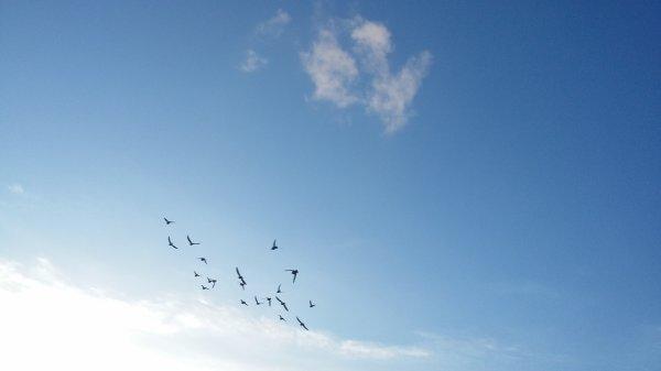 la petite voler du soir des veufs