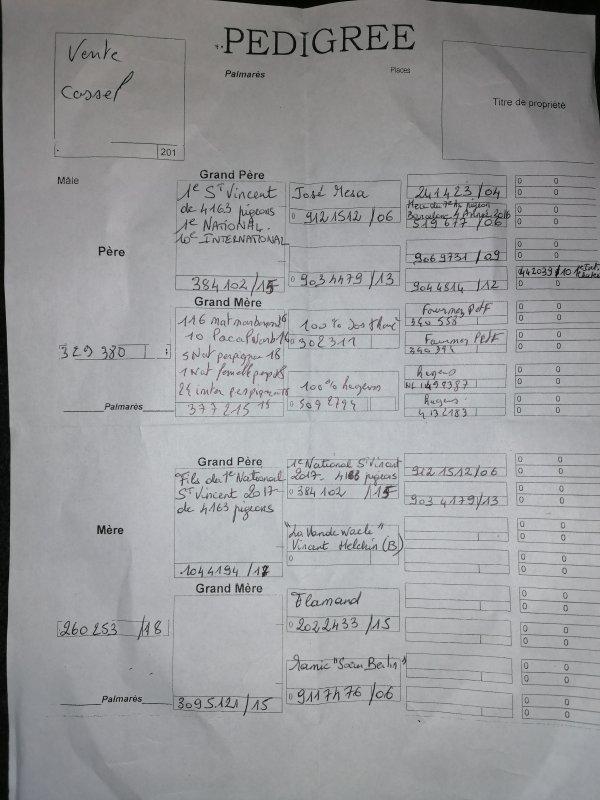 Voici le pedigree du jeune qui sera offert à notre vente le messager de la montagne  http://www.francolomb.com/pigeons/n-6-tandem-yohan-carrette-julien-vanpeperstraete