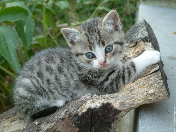 trop mimi ce chat chat