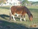 Photo de moi-est-les-chevaux