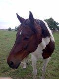Photo de horsepomelo