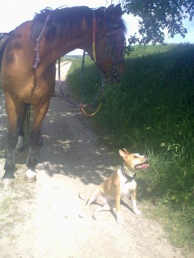 Mon cheval et ma chienne <3