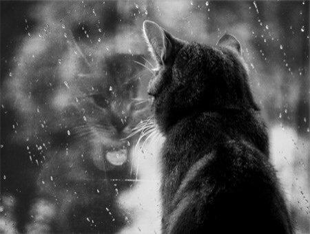 """☮ Citation 2 : """"La pluie..."""" ☮"""