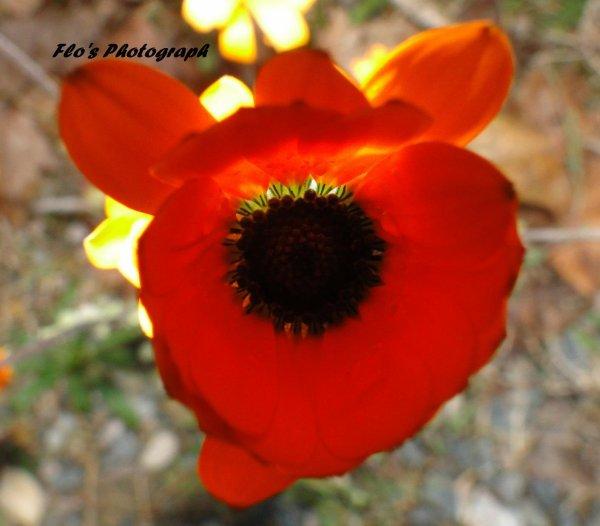 Toutes les fleurs de l'avenir sont dans les semences d'aujourd'hui. Alors choisi ce que tu semes.