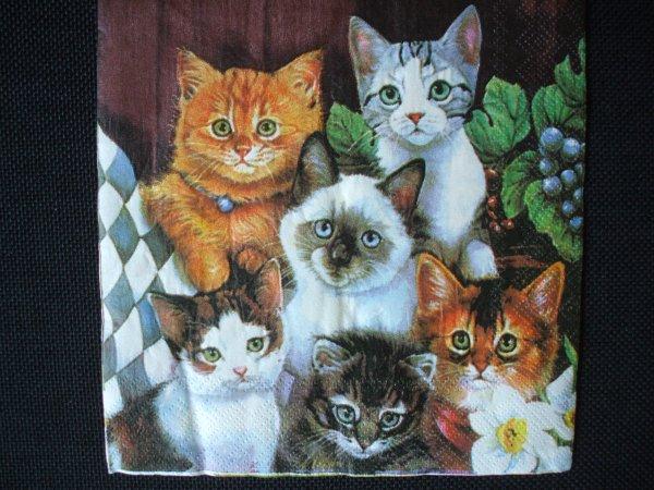 cache-pot chats