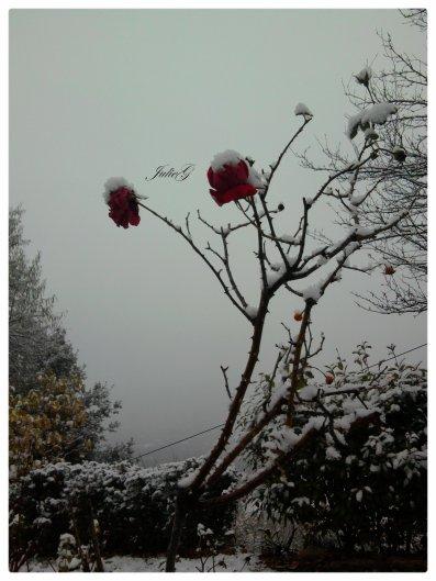 Photographie-JulieG  Photo en hiver avec la magie  de la neige; Portable Samsung -> Kiff et partage.