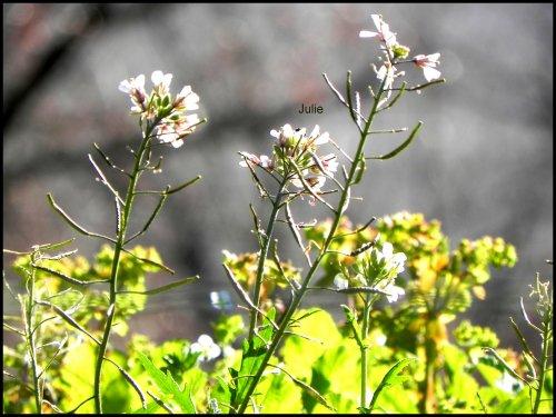 Photographie-JulieG   Fleur; Appareil photo Nikon Cooplix P100 -> Kiff et partage.