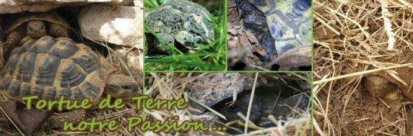 Un blog pour vous, fans de tortues...