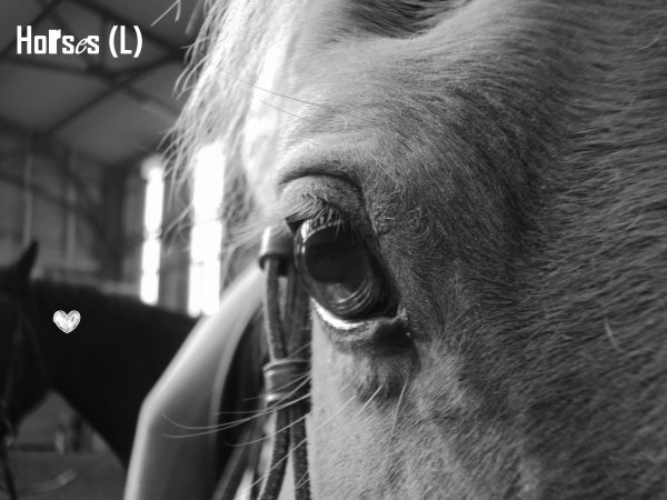 ♥  Horse ♥