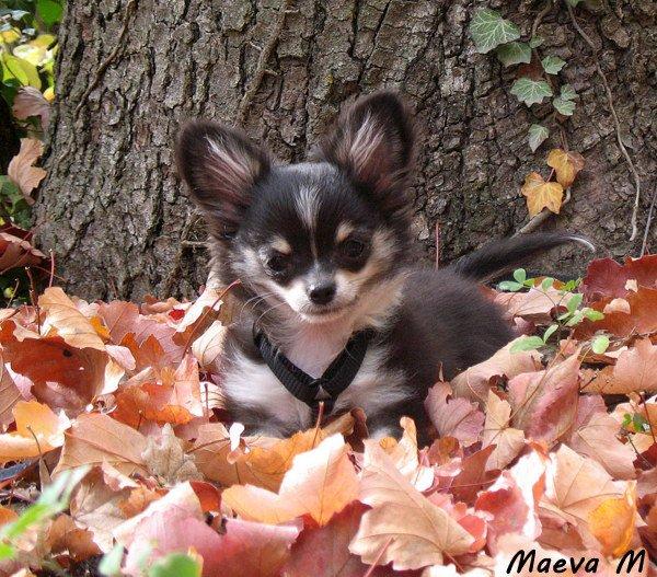 Les couleurs de l'automne !