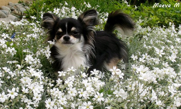 Fleurs et tendresse pour tit Harrold - Coquinou !