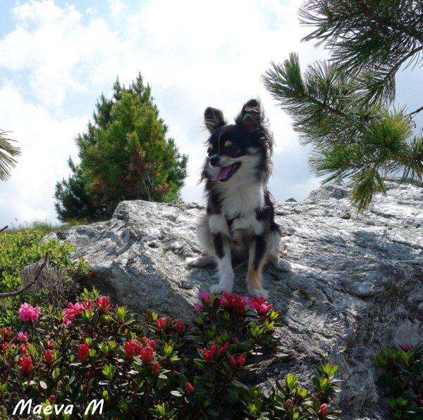 Fleurs, doudou, montagnes...