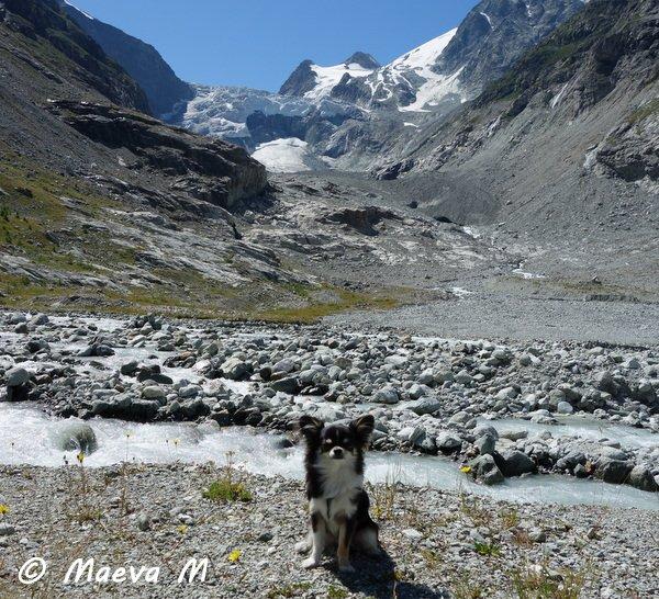 Eté 2013 - Glacier du Mont Miné - Vallon de Réchy - Pas de Maimbré - Violettes - Jardin