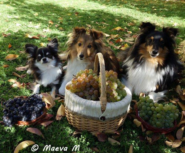 Automne 2013 - jardin - vignes- amis...