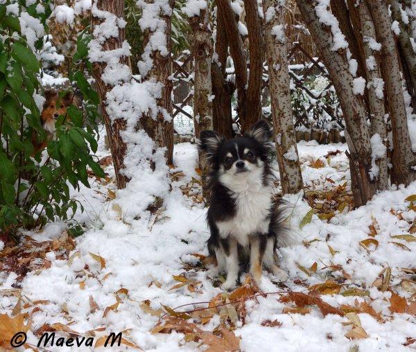 Automne et hiver 2013 -  amis - jardin - Noël