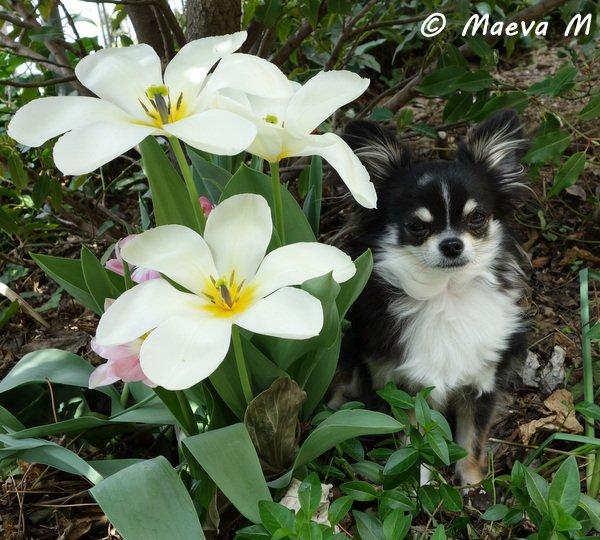 Printemps 2014 - fleurs...