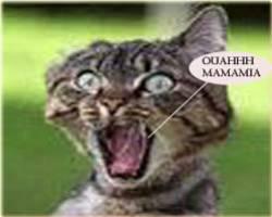 Chat Qui Fait Peur le chat qui fait peur - belledenfer