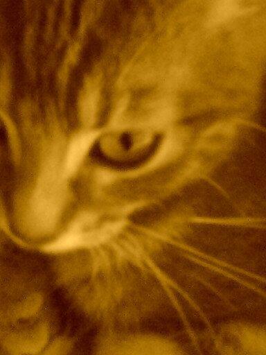 Tigresse <3