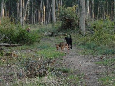 Derniere ballade en forêt ......