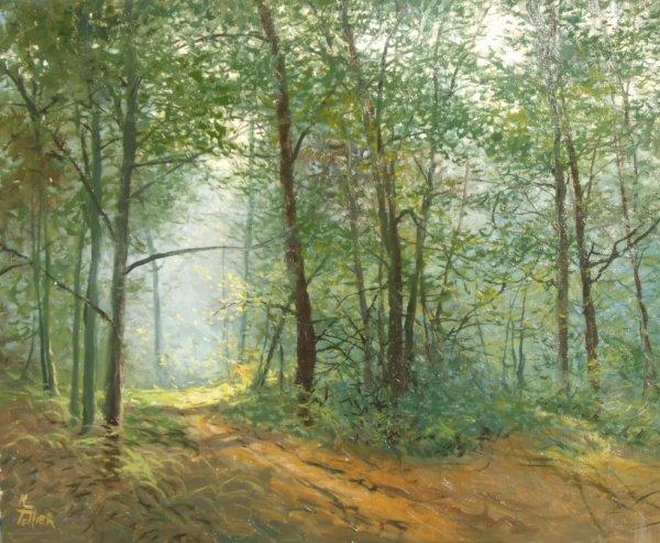 """""""La forêt des Colettes"""""""