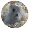 Hamster-Kitty