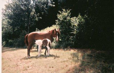 Julo poulain septembre 1997