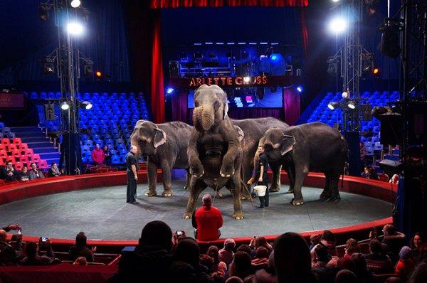 WEEK-END à LILLE pour aller voir le Cirque Arlette GRÜSS