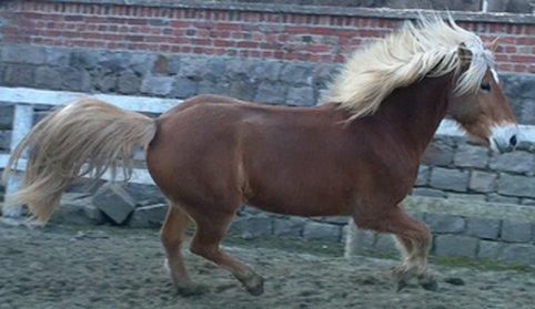 On ne s'ennuie jamais avec un cheval ...