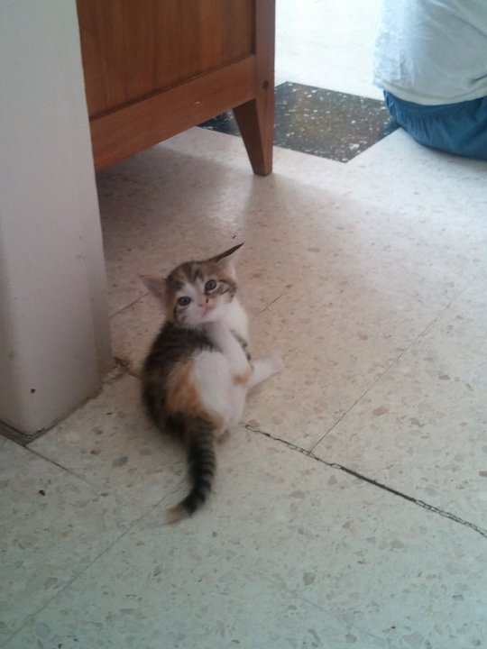 la ptit chat a ma femme :)
