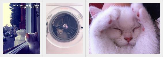 Je vous présente Dr. Watson, le chat angora d'Alex →    Cute, n'est-ce pas ? :D